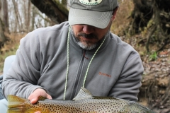 Deep South Fly Anglers Brown Trout