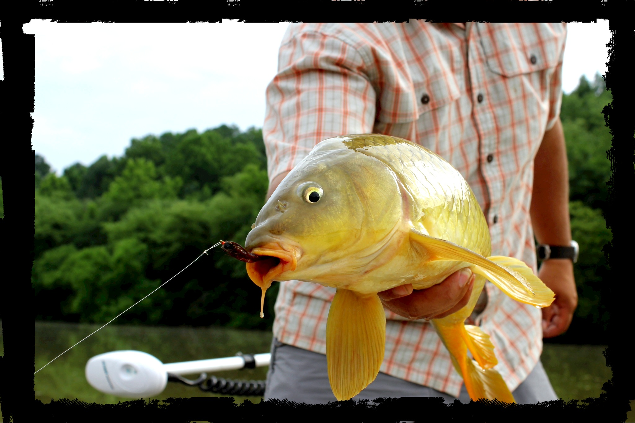 Towee boat archives deep south fly anglers for Fly fishing carp
