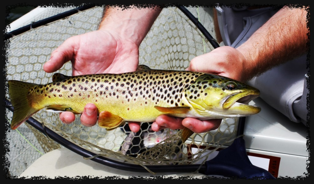 browntrout23