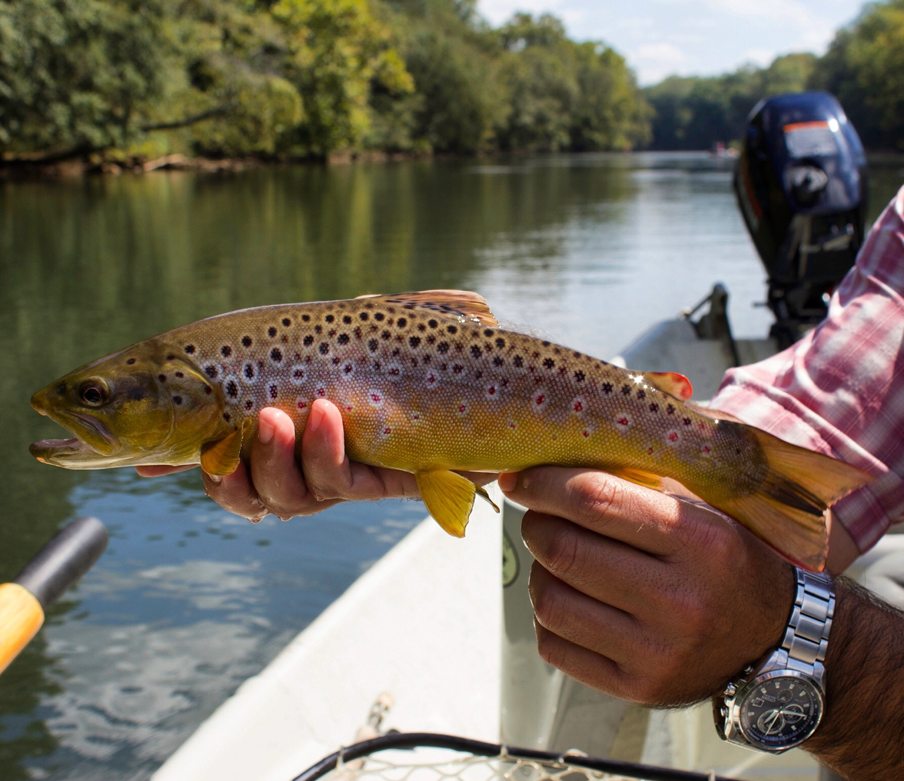 Fly fishing the chattahoochee river in atlanta georgia for Fishing in atlanta