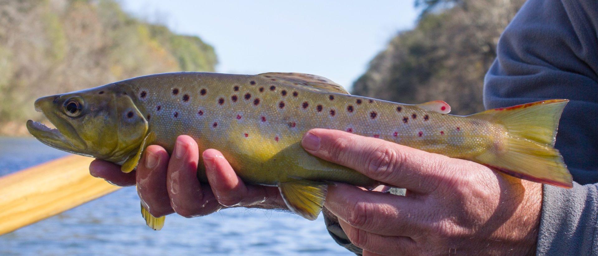 Atlanta fly fishing guide trips chattahoochee river for Georgia trout fishing map